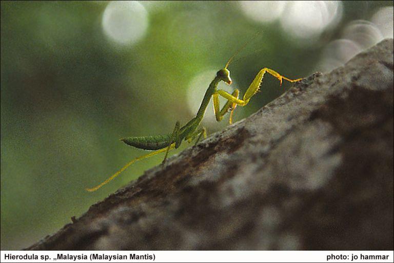 Wildlife Photography - Jo Hammar